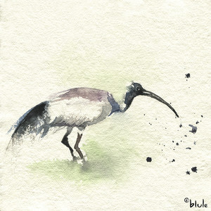 Small 0098 funny bird 2000px