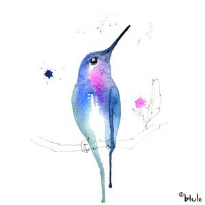 Small 0357 petit colibri de paradis 2000px