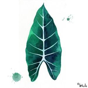 Small 0956 leaf 800px