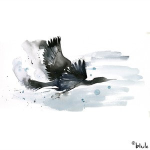 Small 0966 seabird 2000px