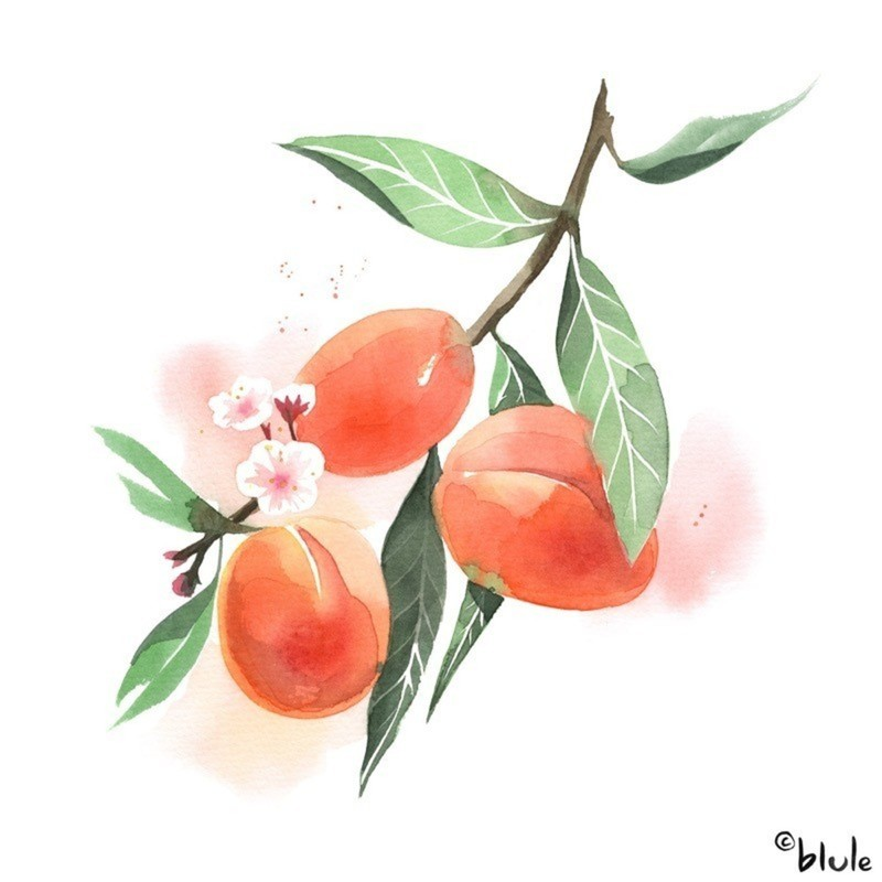 Large 1197 apricot 800px